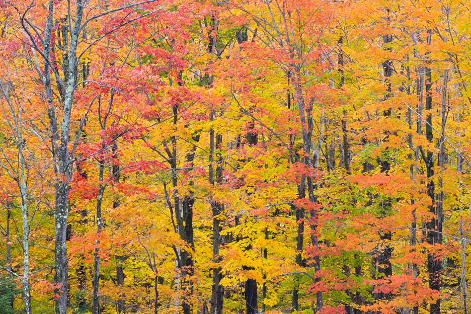 """Nature's Kaleidoscope"" - A kaleidoscope of autumn color. Green Mountain National Park, Vermont."