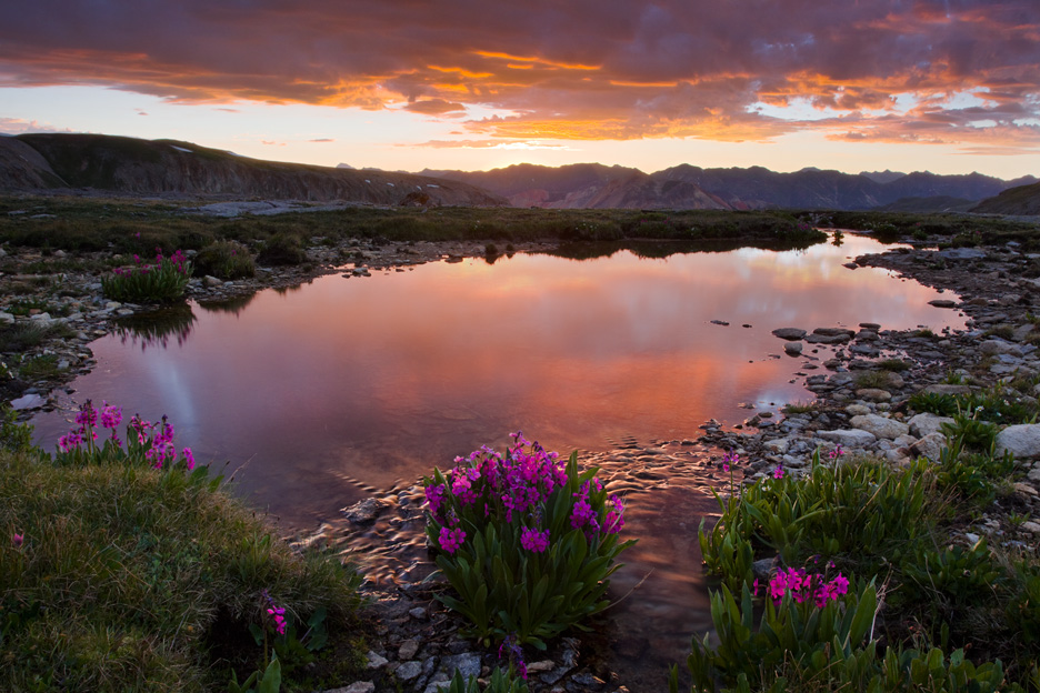 """Paradise Tarn"" - A beautiful sunrise from a tarn lined with flowers high in the San Juan mountains, Colorado."