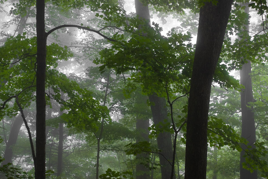 """Magic Forest"" - A forest in the fog in summer. Shenandoah National Park, Virginia."