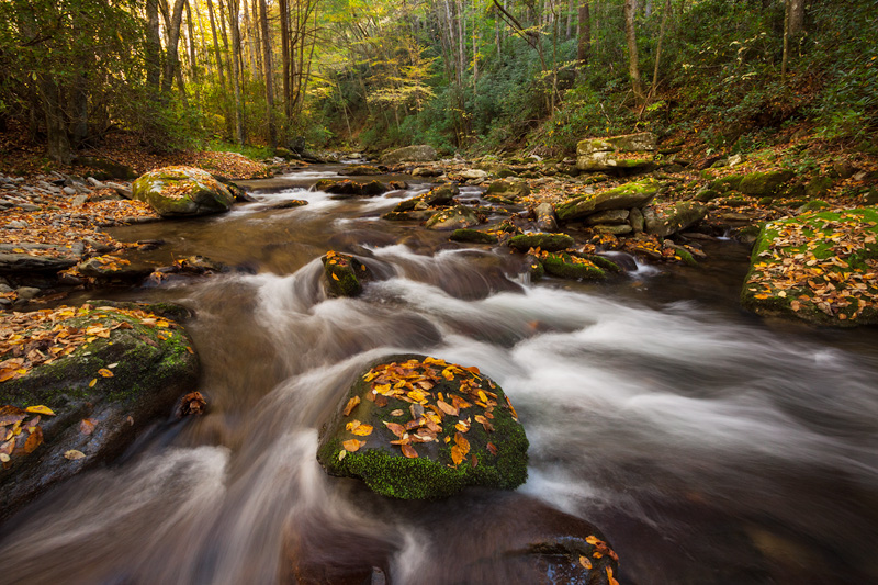 """Medicine"", Straight Fork, Great Smoky Mountains National Park, Tennessee, United States"