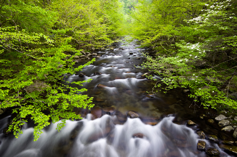 Spring Flow, Tremont, Great Smoky Mountains National Park, Tennessee, United States.