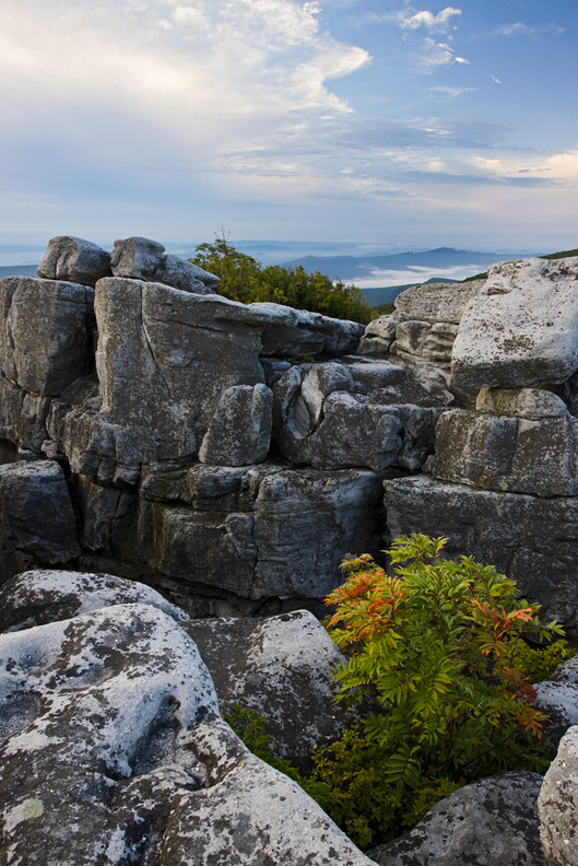 Early Morning Diffused Light at Bear Rocks, Dolly Sods North, West Virginia, United States.
