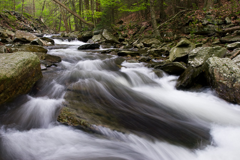 Bug Hunting Creek in Spring, Catoctin Mountain Park/Cunningham Falls State Park, Maryland, United States.