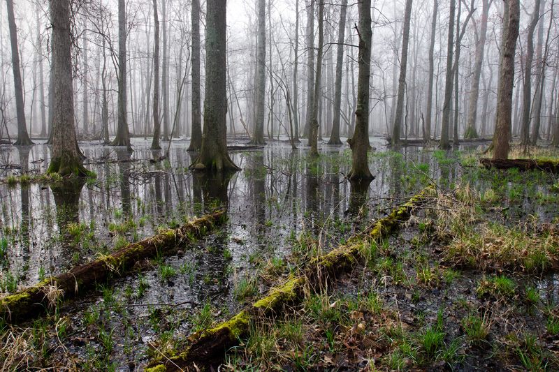 Foggy Swamp, Bull Run Regional Park, Virginia, United States.