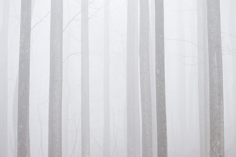 Foggy Forest in Shenandoah National Park, Virginia, United States.