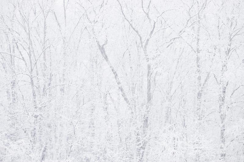Manassas Battlefield National Park, Virginia During Heavy Snowfall in the Winter.
