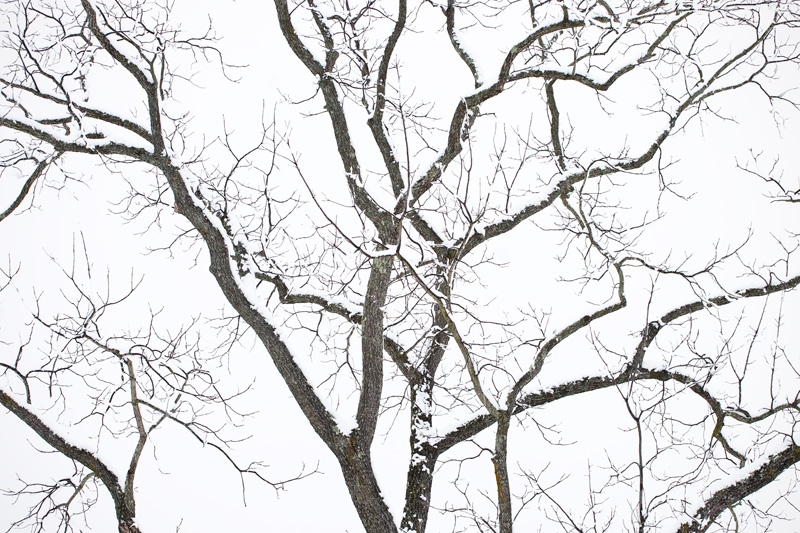 """Winter's Sleep"", High Key Tree after Snowfall, Manassas Battlefield National Park, Manassas, Virginia"