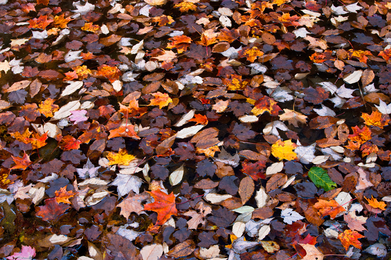 Fallen Autumn Leaves, West Virginia.