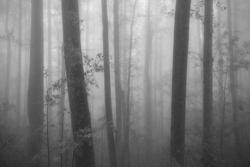 """The Oracle"" - A foggy forest in Shenandoah National Park, Virginia."