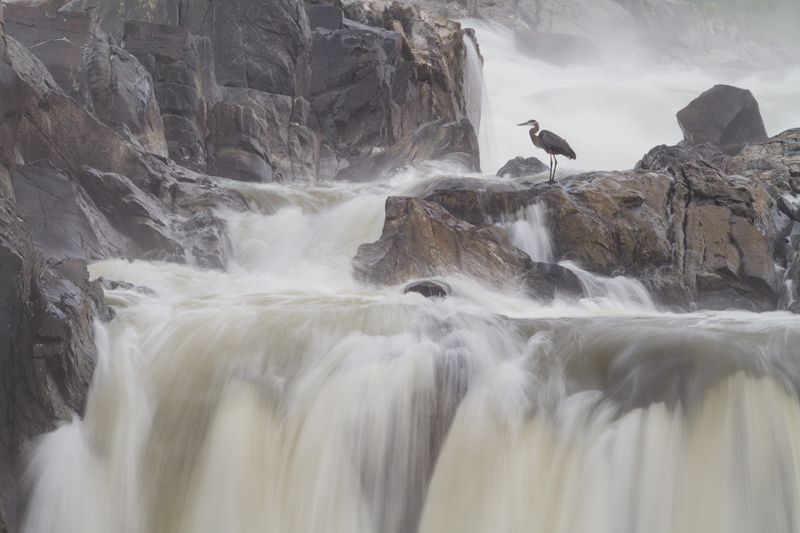 """Adrift"" - A small bird in a big landscape. Great Falls National Park, Virginia."
