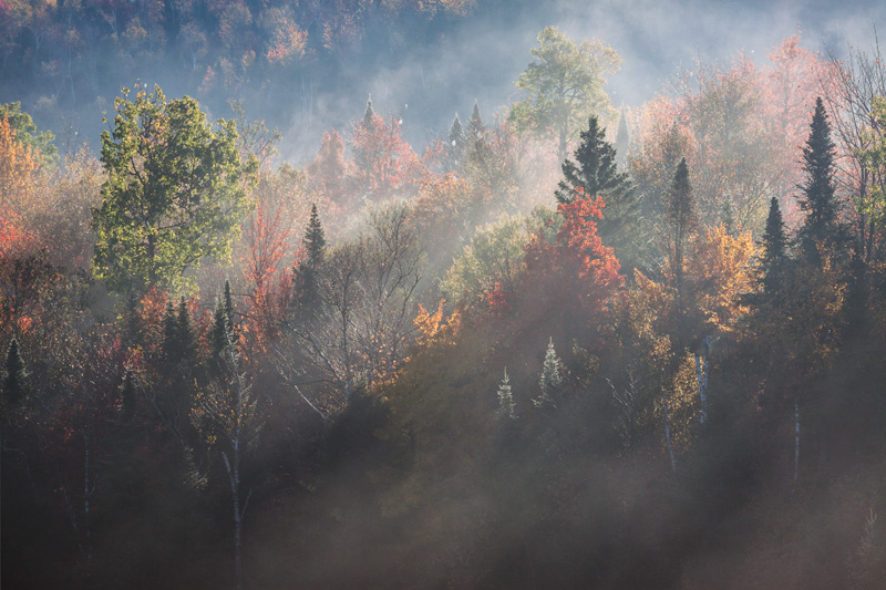 """A New Chapter"" - Light shines vividly through morning fog in Adirondack Park, New York."