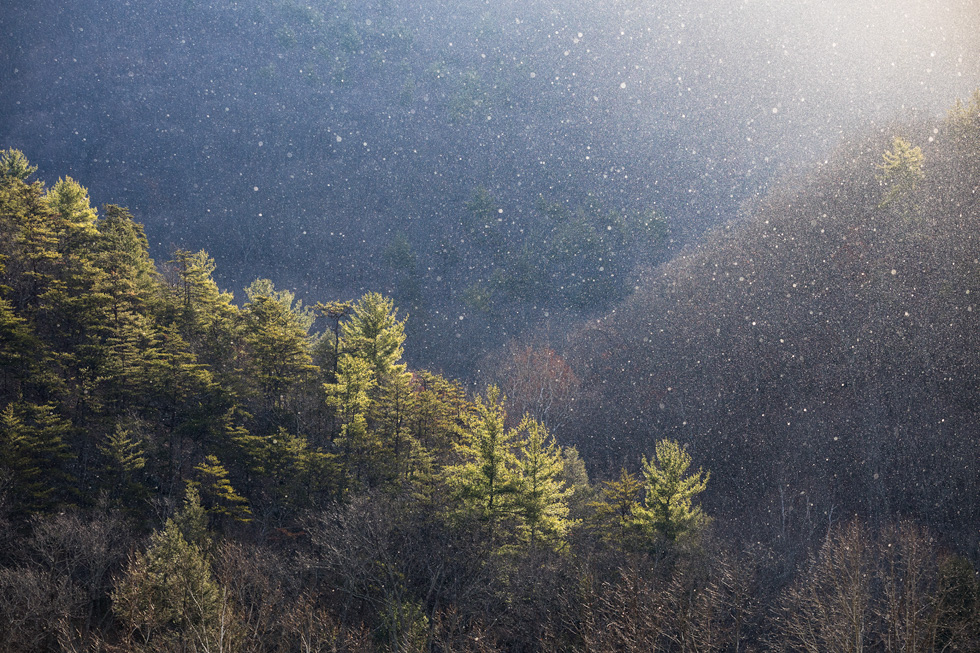 """Hopeful Moment"" - Backlit snow showers and winter pines on a hillside in Monongahela National Forest, West Virginia."