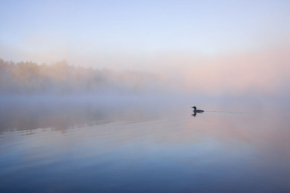 loon-pastel-foggy-pink-sunrise.jpg