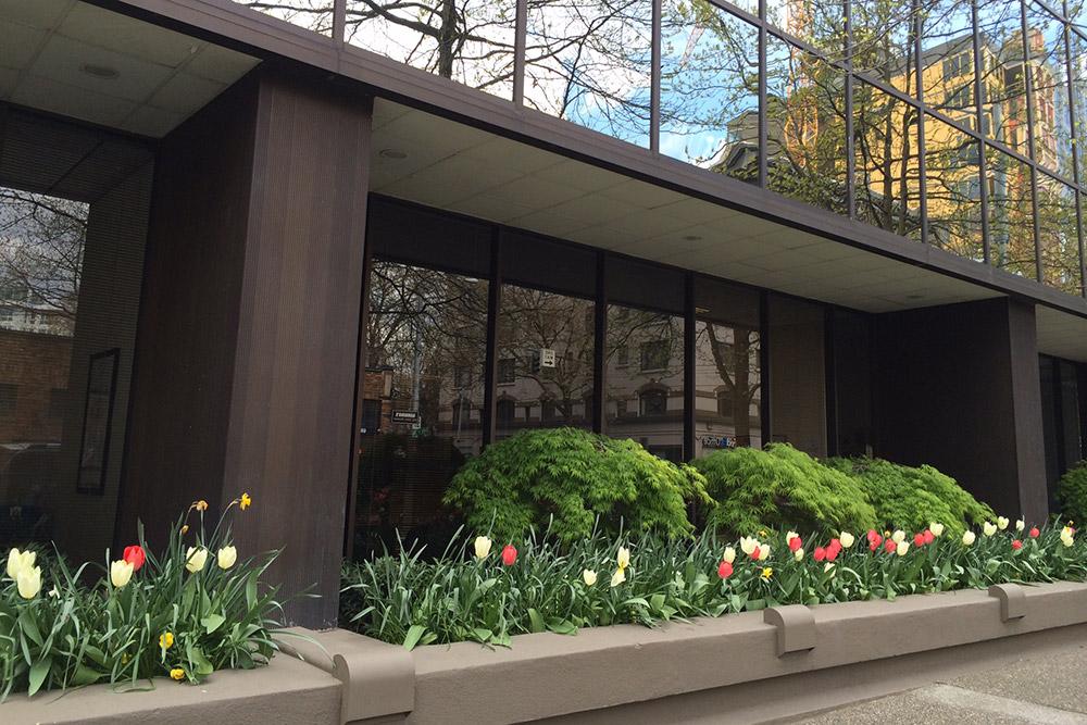 tulips-near-office