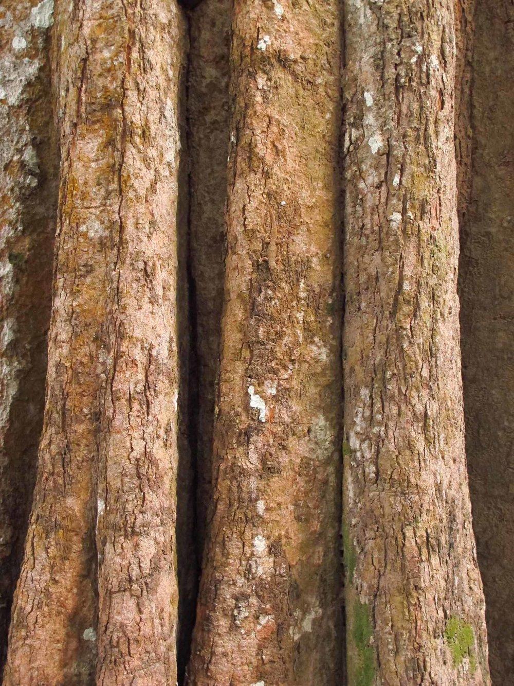 Lizard, Ta Prohm, Angkor Wat