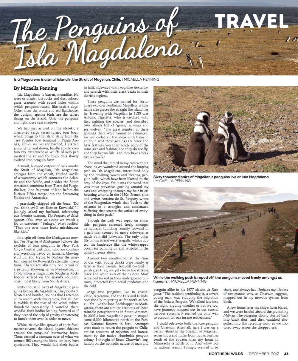 The Penguins of Isla Magdalena  in Northern Wilds