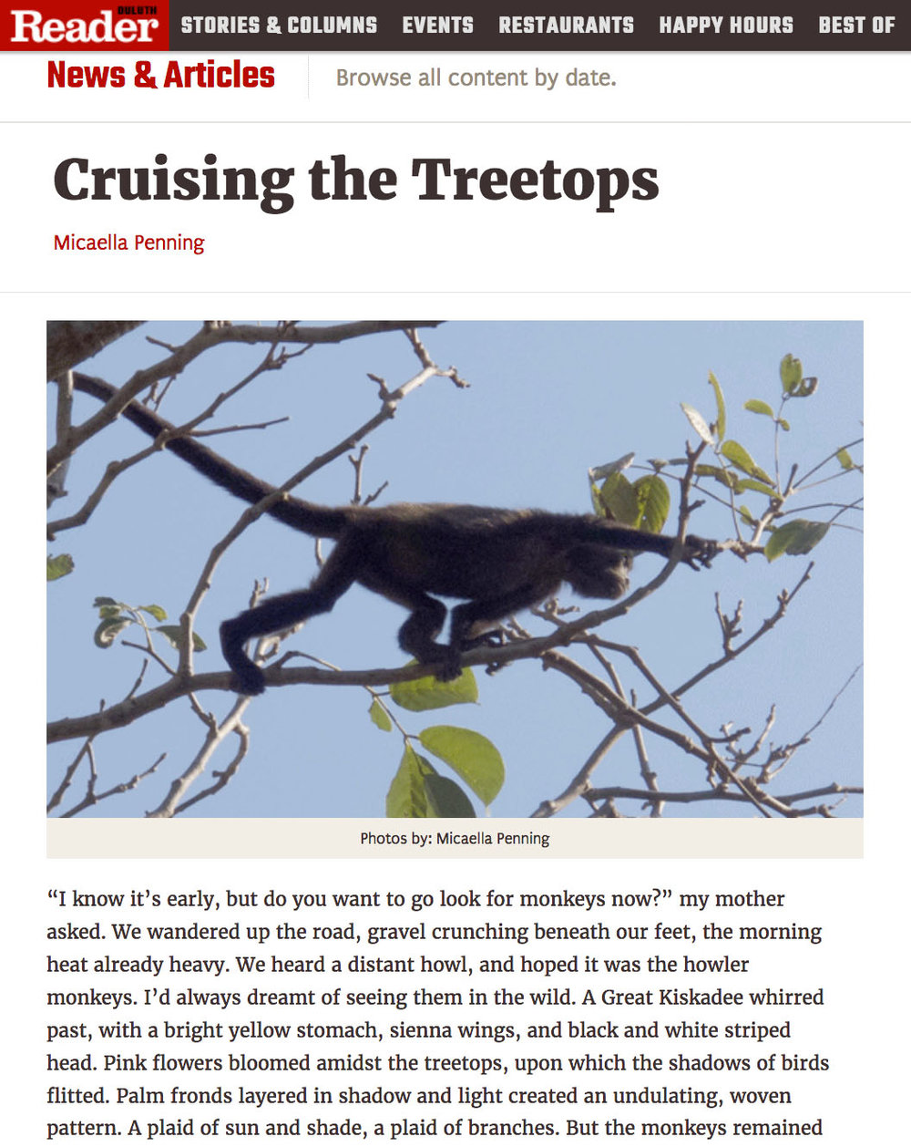 Cruising the Treetops   in the Duluth Reader