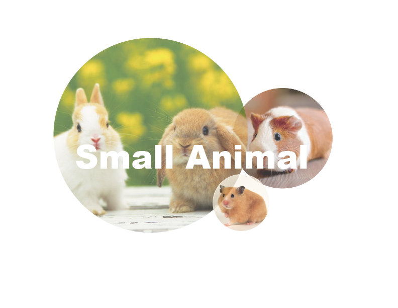 For Small Animal