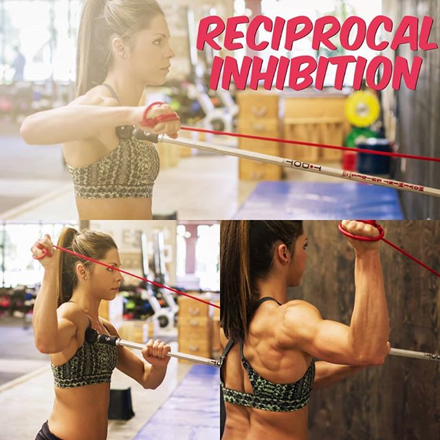 Reciprocal inhibition describes the process of muscles on one side of a joint relaxing to accommodate contraction on the other side of that joint. Adding resistance can enhance the reflex. Here the athlete is mobilizing the anterior shoulder so she actively contracts the posterior shoulder. #tdotmobility #reciprocalinhibition #mobility #mobilization #mobilitywod #shouldermobility #shoulderhealth #shoulderpain #postureproblems #posture #setscap #armcare #preparelikeapro #recoverlikeapro #selfmyofascialrelease #selfmobilization #softtissuetreatment #triggerpoint #activerelease #movelikethis #MovementMafia #movementguides learn more about the T-Dot Mobility System at link in bio.