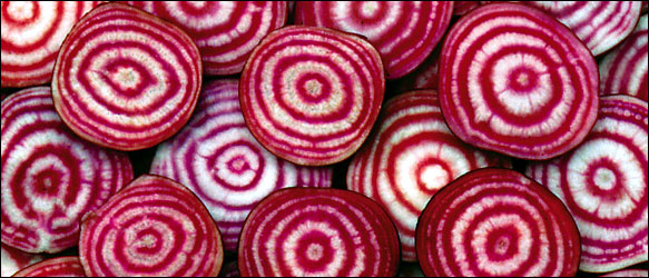 Chioggia Beets                              (photo from the Seed Savers Exchange)