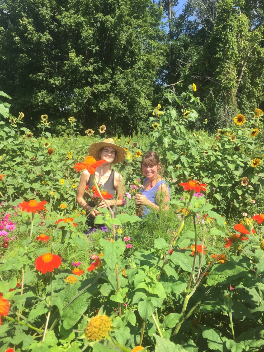 Members enjoying the bounty of the flower and herb garden during the height of the summer and Julia harvesting carrots for a weekly pickup (right).