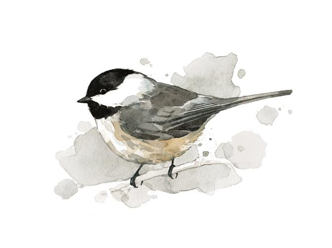 chickadee watercolor painting