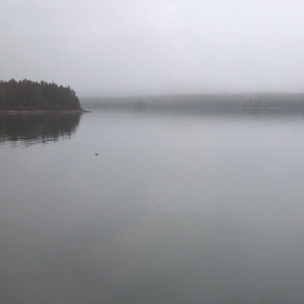 fog maine