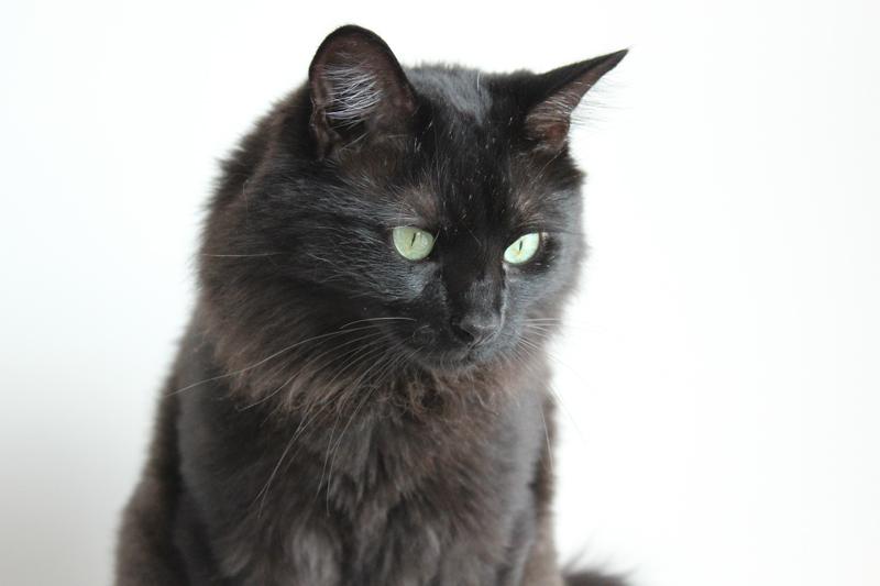 tintin cat
