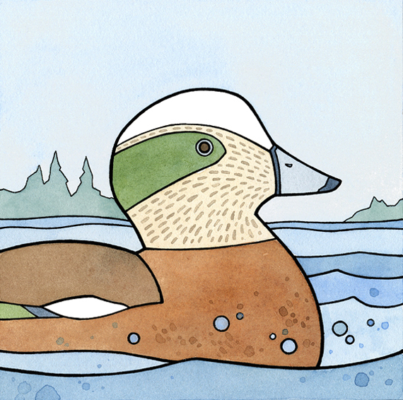 "American Wigeon - 5x5"" ink and watercolor illustration"