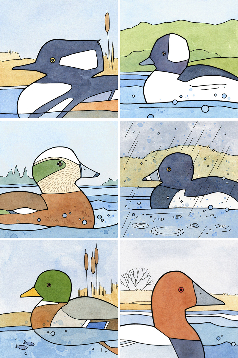 Left to Right, Top to Bottom: Hooded Merganser, Buffledhead, American Wigeon, Ring-necked Duck, Mallard, Canvasback.