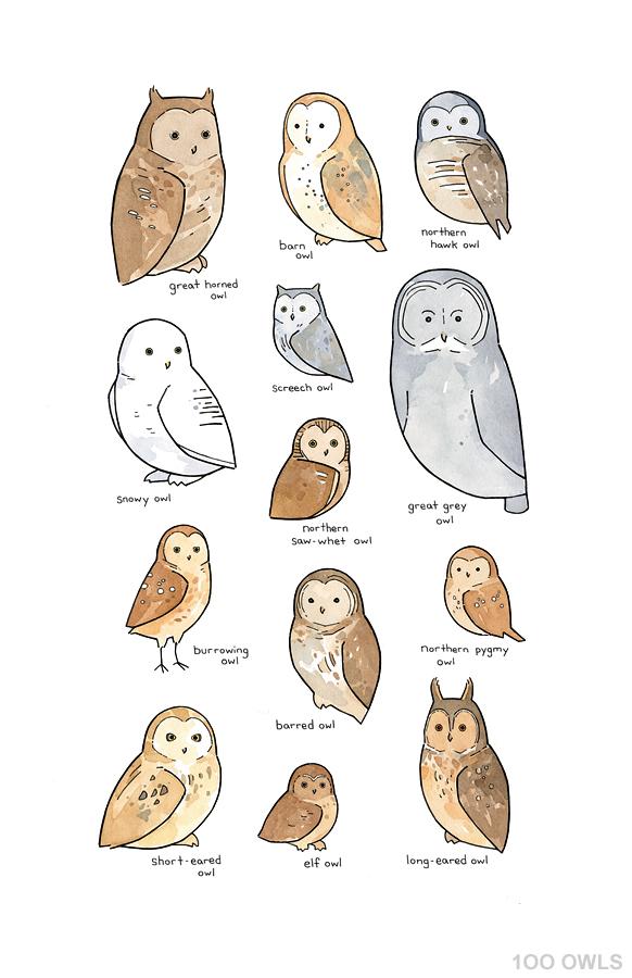 owl-drawings.jpg