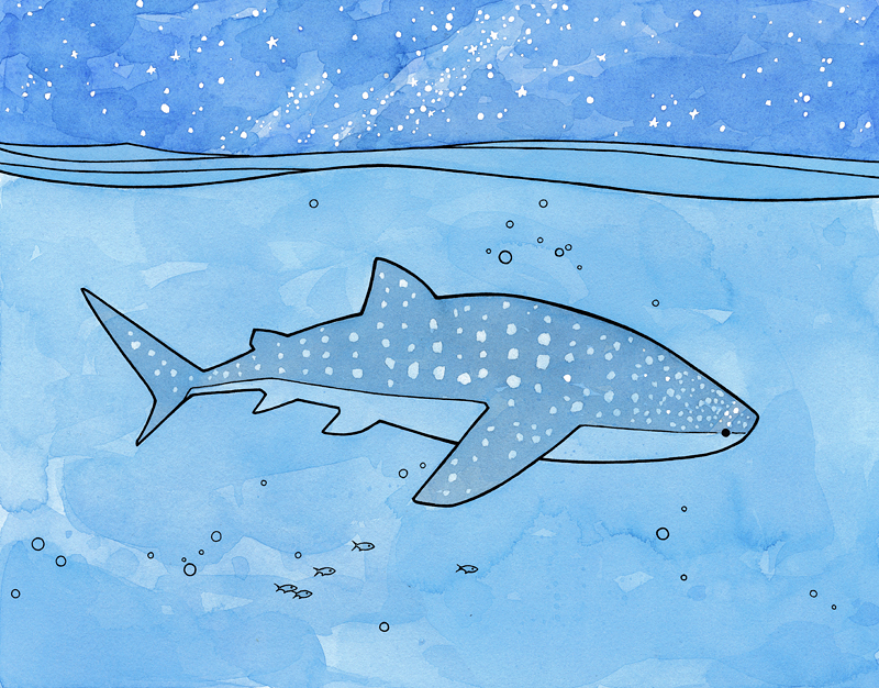 whale-shark-illustration.jpg