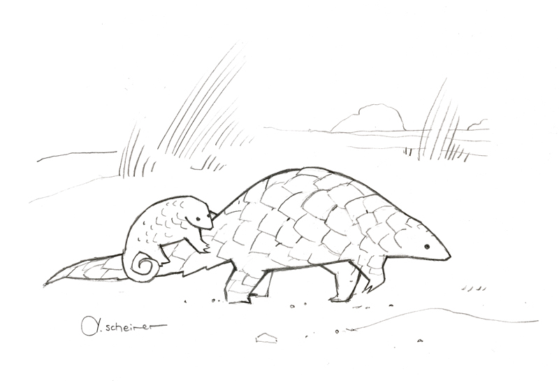 pangolin drawing