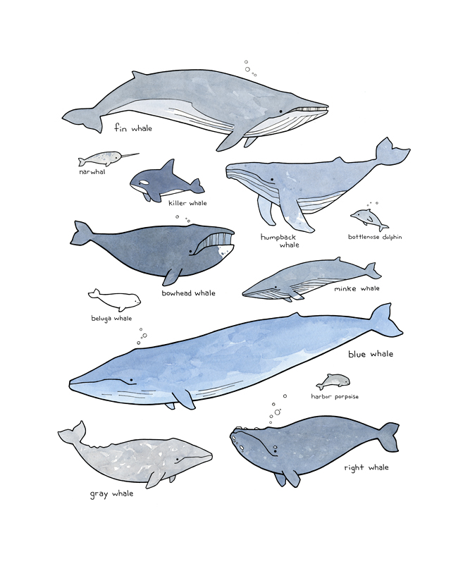 whales-illustration-art