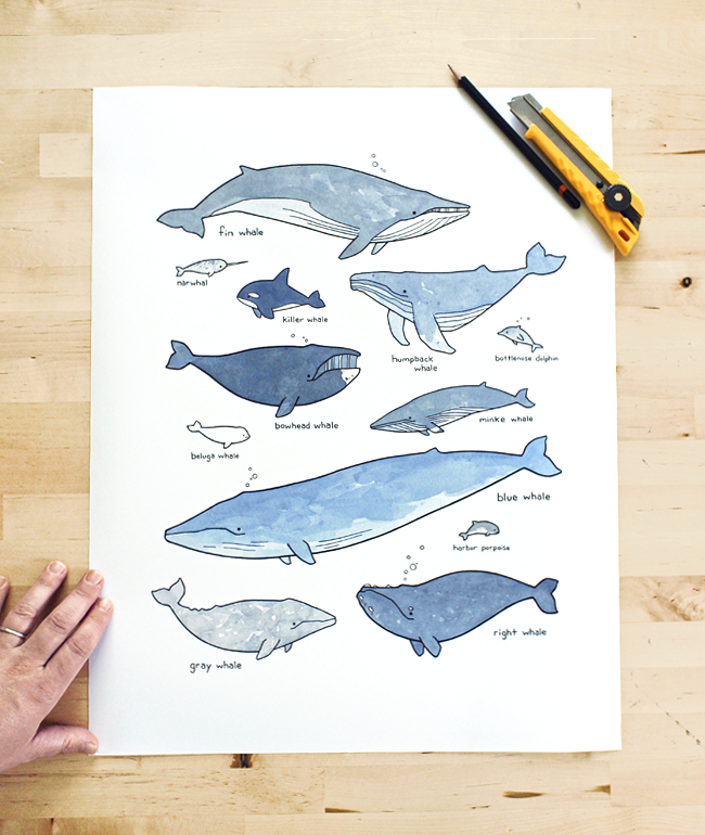 "16x20"" print - labeled whales drawing"