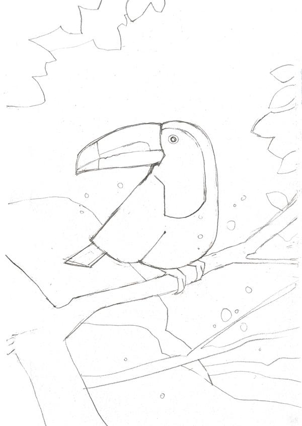Toucan sketch