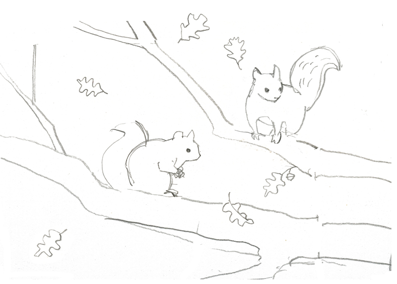 Squirrels sketch