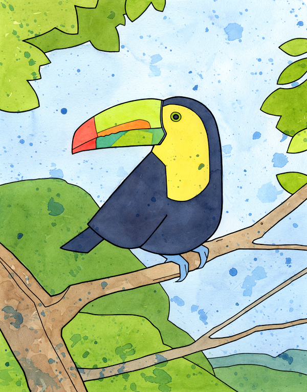toucan illustration - studio tuesday