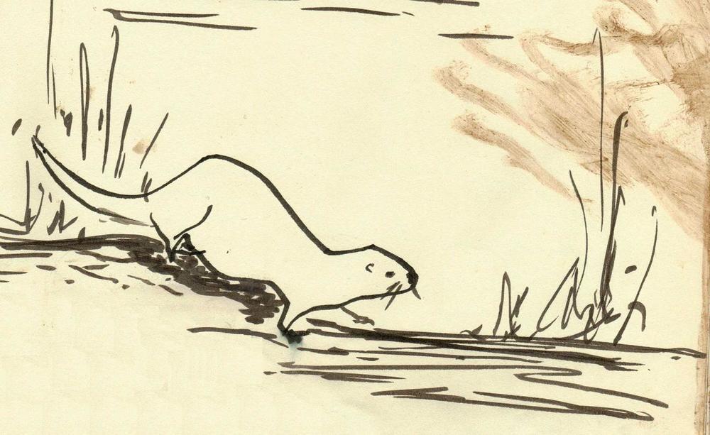 otter-drawing-sophie-neville