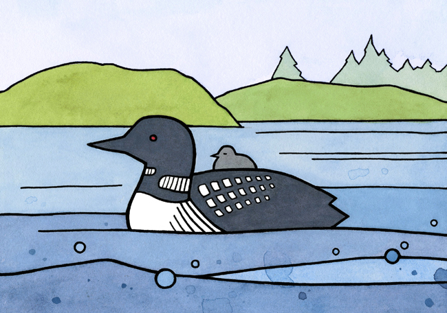 Loon and baby drawing - studio tuesday