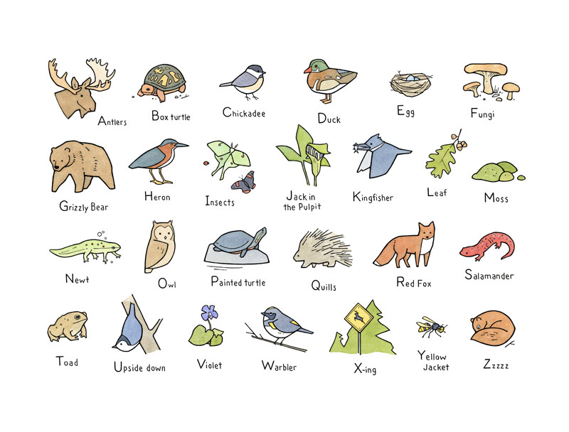 Illustrated Woodland Alphabet Buy Woodland Alphabet Print