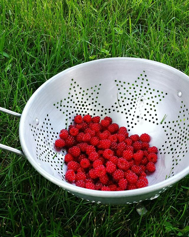 Wild raspberries. Off on vacation for the next week!