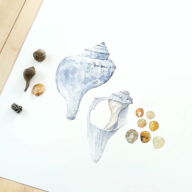 Headed to the beach the rest of the week. Planning on getting some good reference and inspiration for the #seashellsofnewenglandbook and my own projects.  #watercolor of #whelk #shells. #beachcombing #seashells #njbeaches
