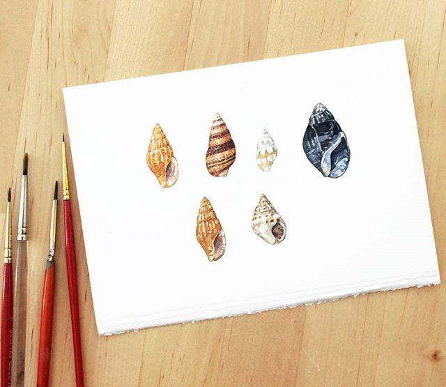 Some littles for the #seashellsofnewenglandbook
