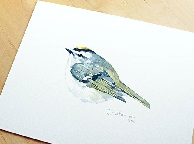 Little Golden-crowned Kinglet watercolor study, off to a new home today.
