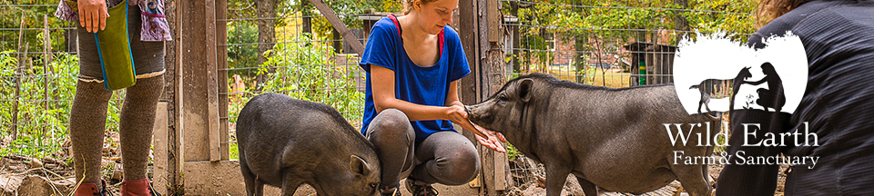 Wild Earth Farm & Sanctuary | Vegan Permaculture & Farmed Animal Sanctuary