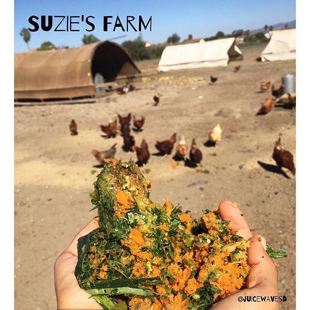 Thank you @suziesfarm for putting on such a fantastic event. Pumpkin Palooza was so fun. If you missed us this weekend, don't worry Suzie's Farm is putting on another event next Saturday at the farm from 10-2pm. See you there. #sippinonzenandjuice #atthefarm #suziesfarm #pumpkinpalooza #supportlocalfarms #farmtotable #juicepulp #circleoflife #happychickens #compost #sustainable #farmlife #organic