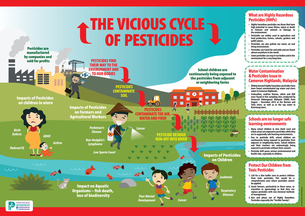 The Vicious cycle of pesticides  -  pesticides action network - pan asia pacific