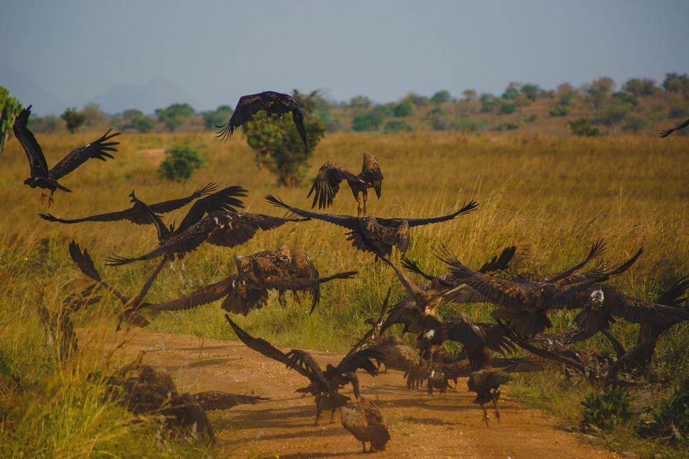 Travel_Uganda-014.jpg