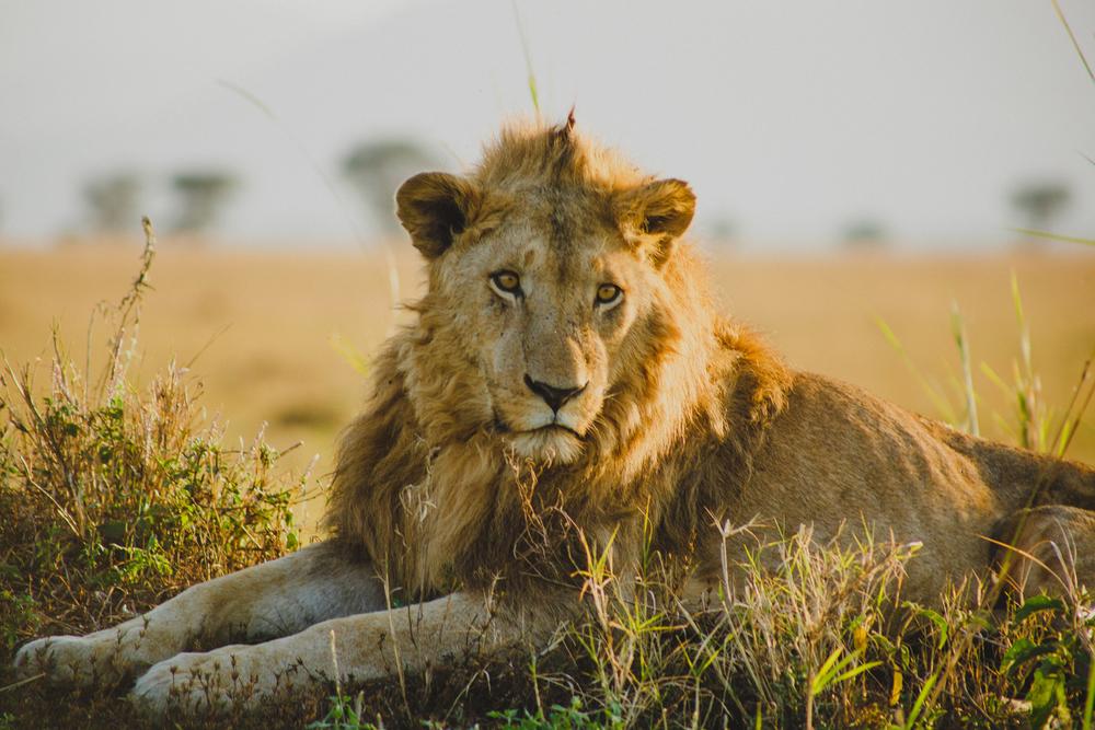Travel_Uganda-024.jpg